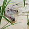 Male And Female Otters