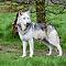 wolf-1-of-1.jpg