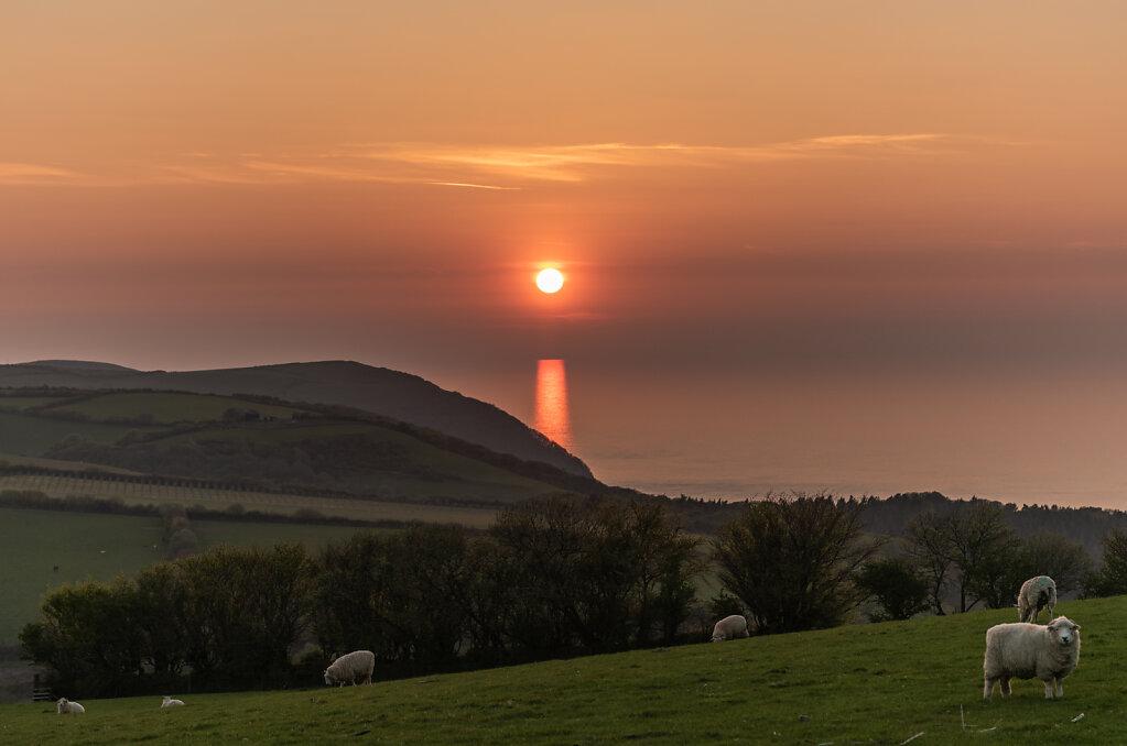 Devon-7310.jpg