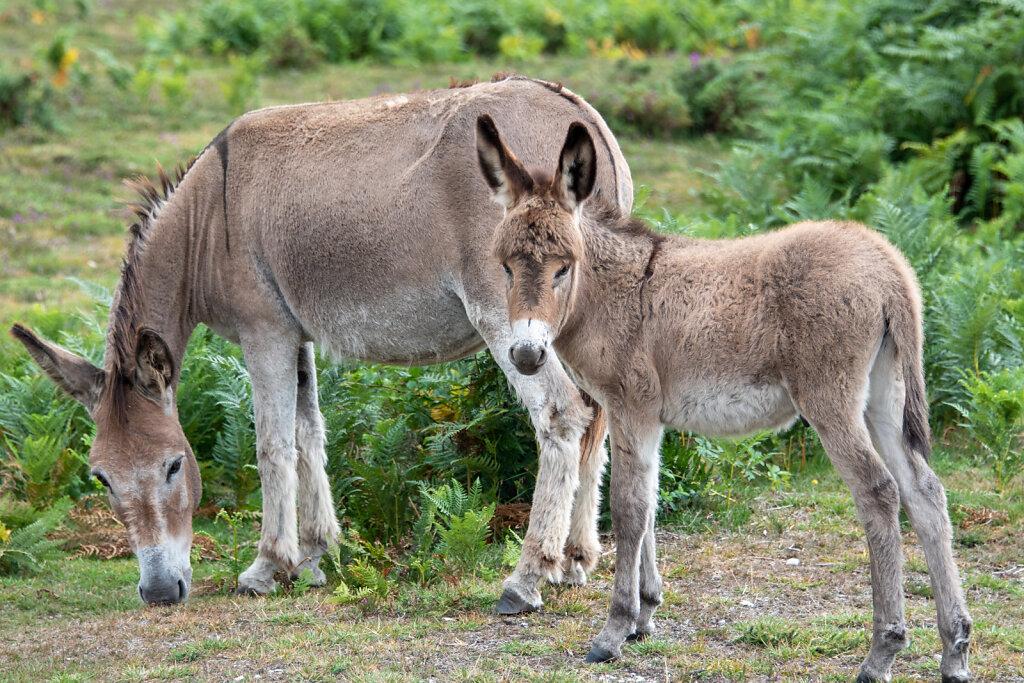 Donkey-family.jpg