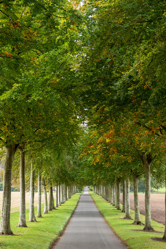 Avenue-of-trees.jpg