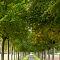 Avenue-of-trees.jpg