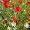 Garden-Flowers.jpg