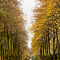 Autumn-Ave.jpg